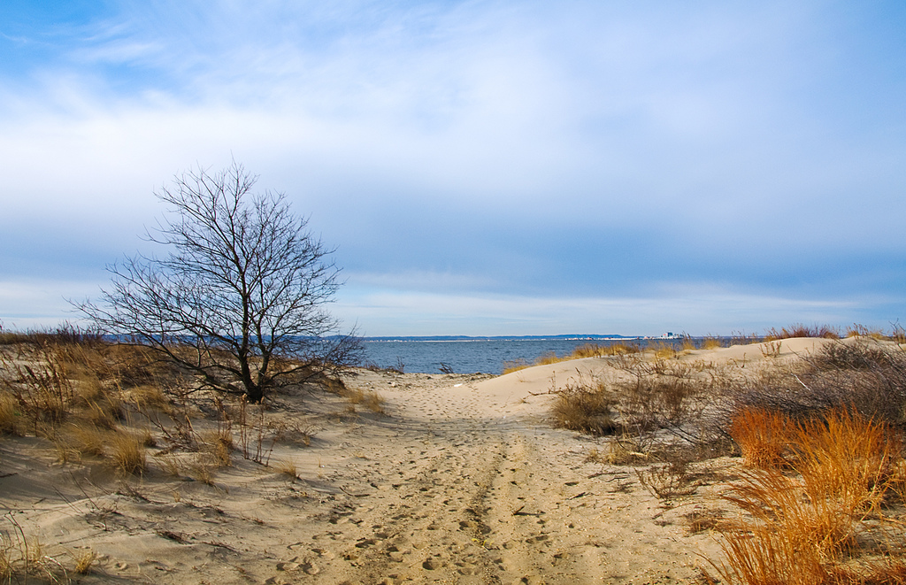 Beach at Sandy Hook